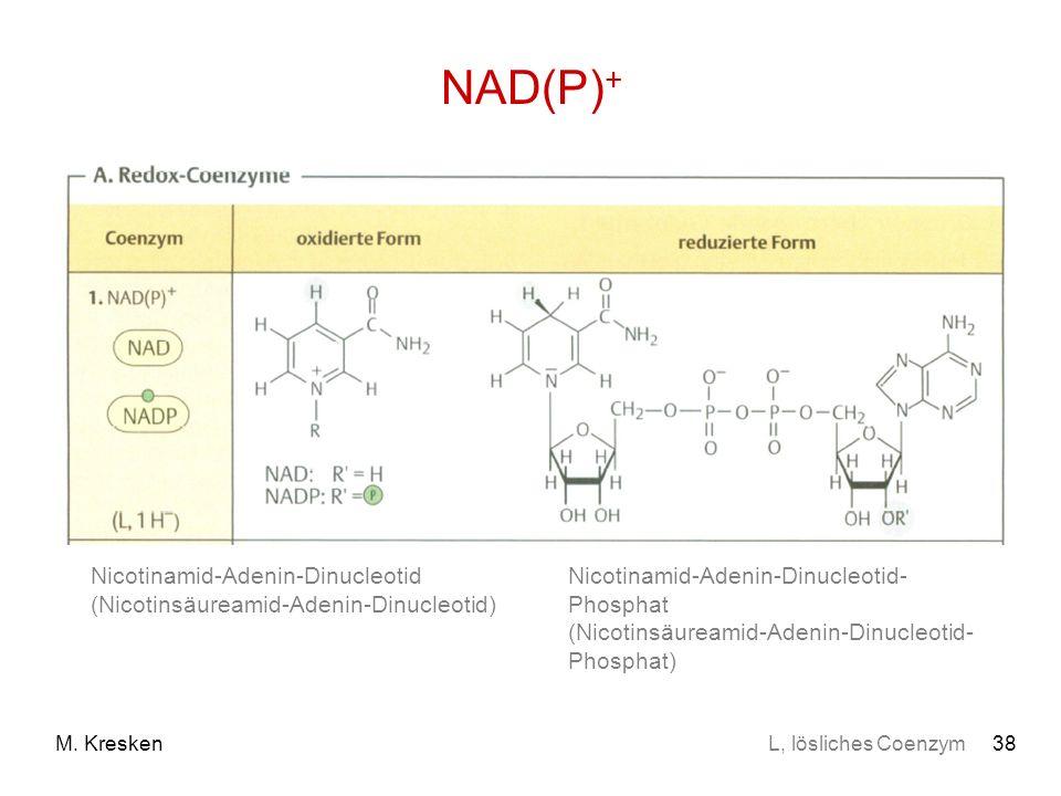 38M. Kresken NAD(P) + Nicotinamid-Adenin-Dinucleotid (Nicotinsäureamid-Adenin-Dinucleotid) Nicotinamid-Adenin-Dinucleotid- Phosphat (Nicotinsäureamid-