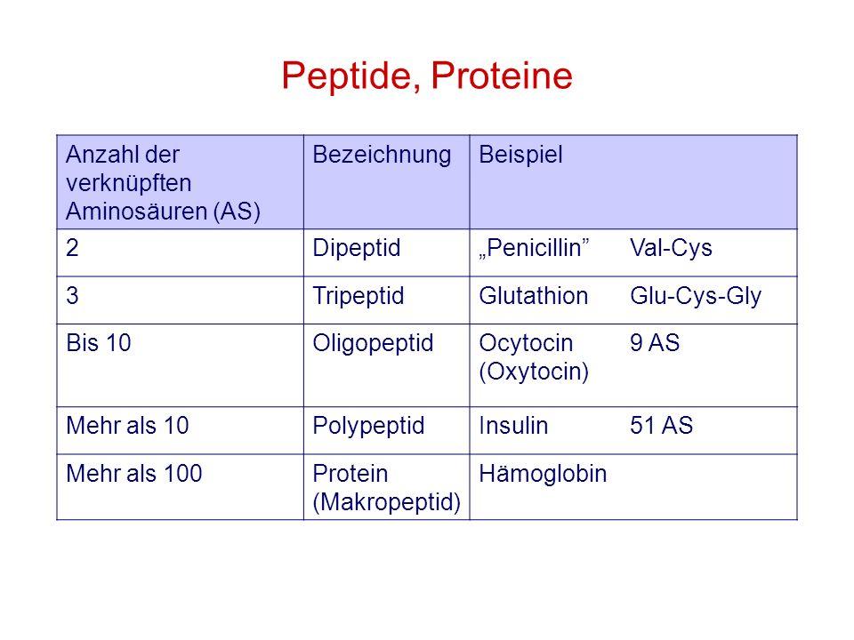 Peptide, Proteine Anzahl der verknüpften Aminosäuren (AS) BezeichnungBeispiel 2DipeptidPenicillinVal-Cys 3TripeptidGlutathionGlu-Cys-Gly Bis 10Oligope