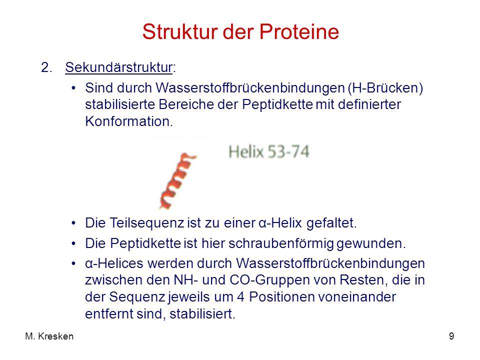 9M. Kresken Struktur der Proteine 2.Sekundärstruktur: Sind durch Wasserstoffbrückenbindungen (H-Brücken) stabilisierte Bereiche der Peptidkette mit de