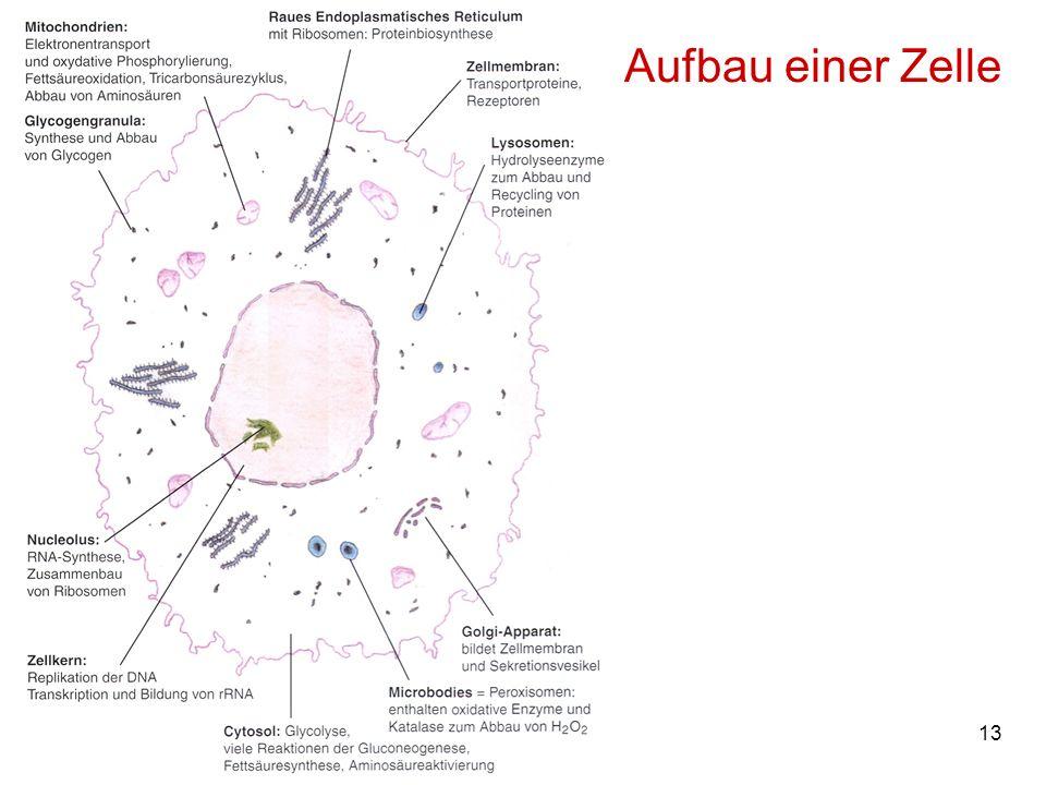 13M. Kresken Aufbau einer Zelle