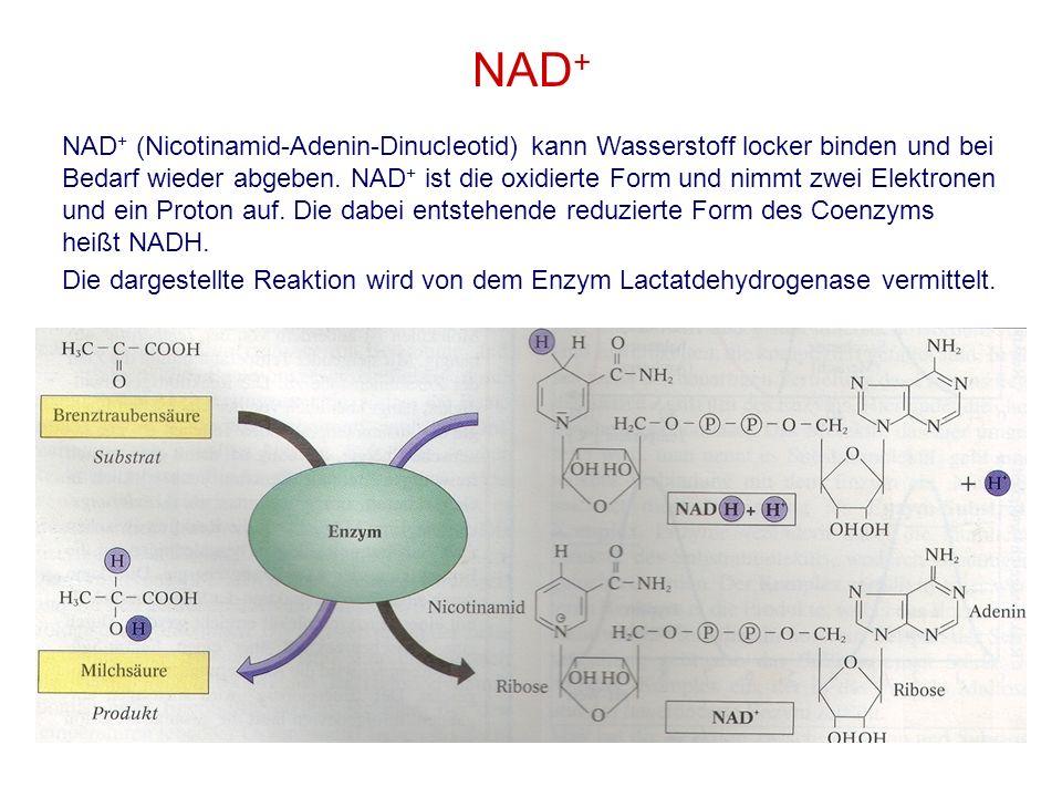 NAD + NAD + (Nicotinamid-Adenin-Dinucleotid) kann Wasserstoff locker binden und bei Bedarf wieder abgeben. NAD + ist die oxidierte Form und nimmt zwei