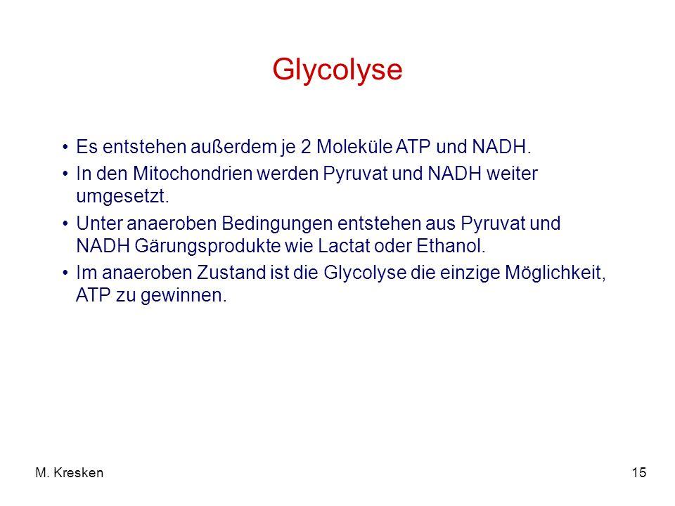 15M. Kresken Es entstehen außerdem je 2 Moleküle ATP und NADH. In den Mitochondrien werden Pyruvat und NADH weiter umgesetzt. Unter anaeroben Bedingun