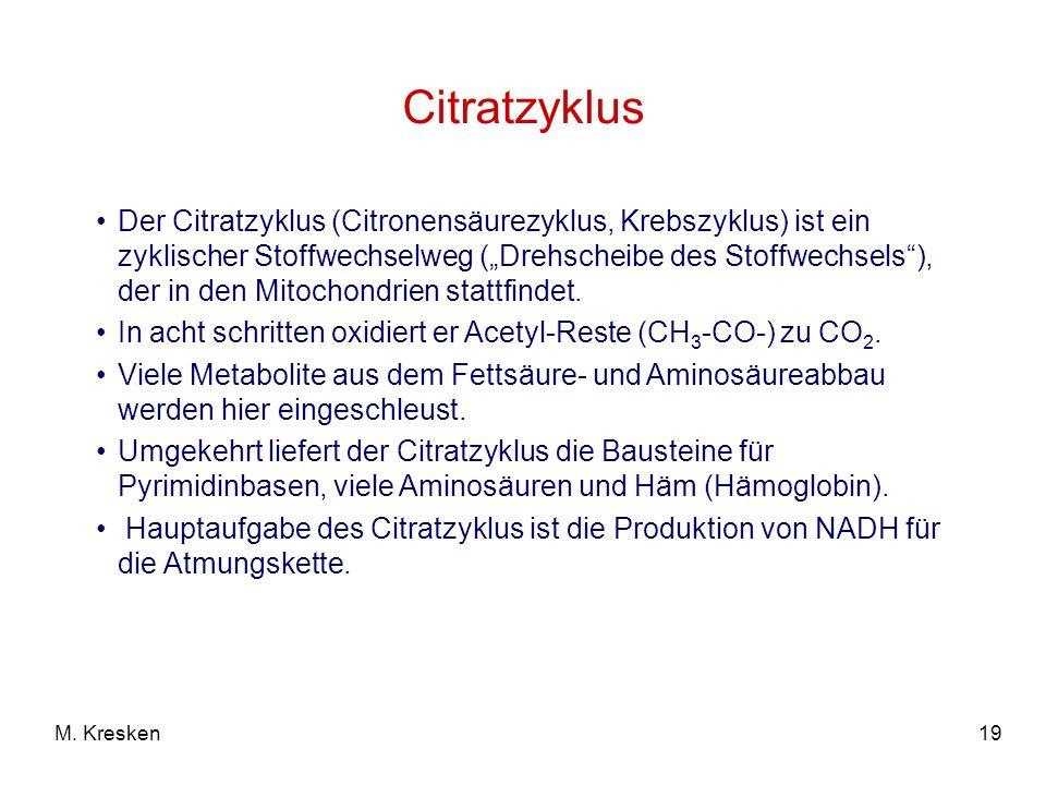 19M. Kresken Citratzyklus Der Citratzyklus (Citronensäurezyklus, Krebszyklus) ist ein zyklischer Stoffwechselweg (Drehscheibe des Stoffwechsels), der