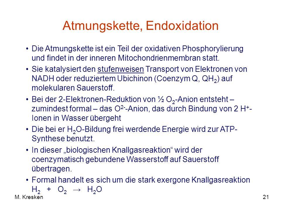 21M. Kresken Atmungskette, Endoxidation Die Atmungskette ist ein Teil der oxidativen Phosphorylierung und findet in der inneren Mitochondrienmembran s