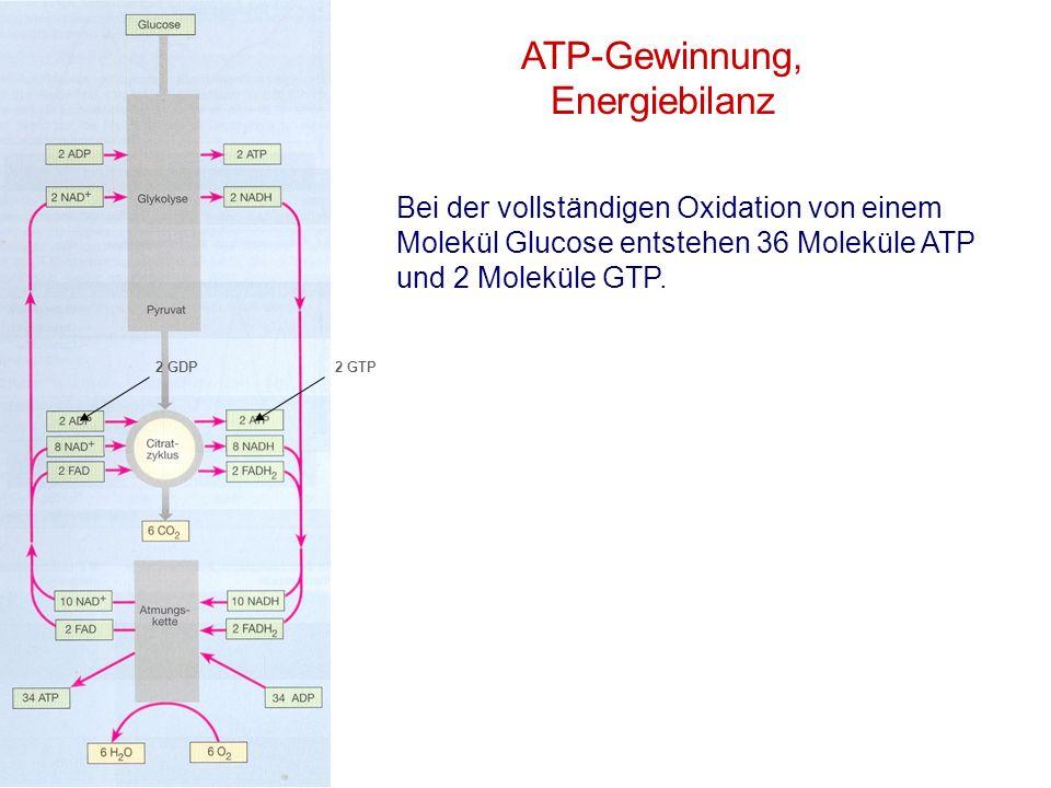 ATP-Gewinnung, Energiebilanz Bei der vollständigen Oxidation von einem Molekül Glucose entstehen 36 Moleküle ATP und 2 Moleküle GTP. 2 GTP2 GDP