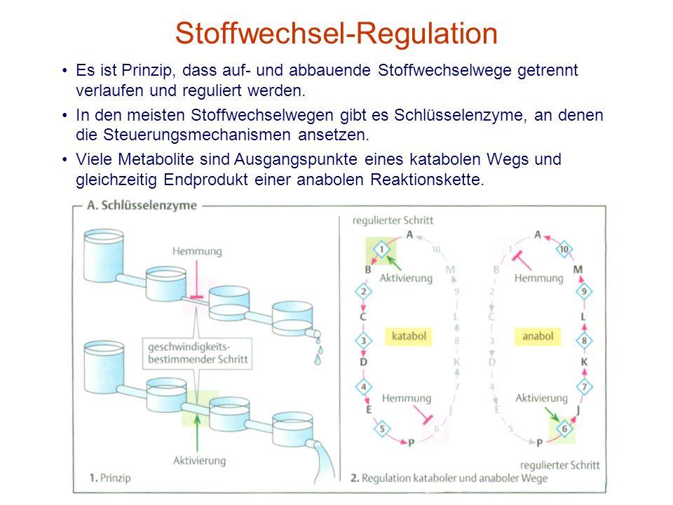 Stoffwechsel-Regulation Es ist Prinzip, dass auf- und abbauende Stoffwechselwege getrennt verlaufen und reguliert werden. In den meisten Stoffwechselw