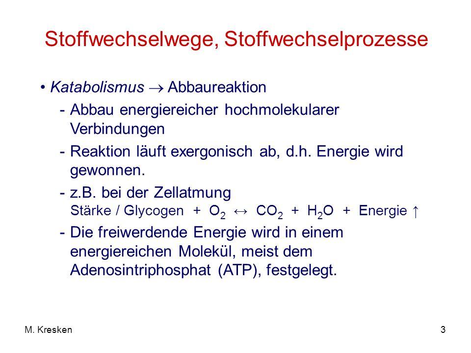 3M. Kresken Stoffwechselwege, Stoffwechselprozesse Katabolismus Abbaureaktion -Abbau energiereicher hochmolekularer Verbindungen -Reaktion läuft exerg