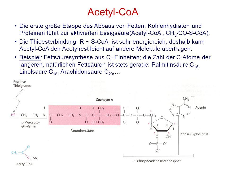 7M. Kresken Acetyl-CoA Die erste große Etappe des Abbaus von Fetten, Kohlenhydraten und Proteinen führt zur aktivierten Essigsäure(Acetyl-CoA, CH 3 -C