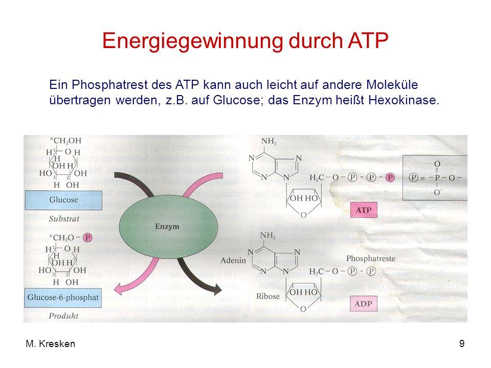 9M. Kresken Energiegewinnung durch ATP Ein Phosphatrest des ATP kann auch leicht auf andere Moleküle übertragen werden, z.B. auf Glucose; das Enzym he