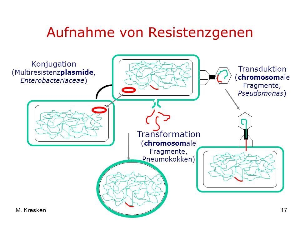 17M. Kresken Aufnahme von Resistenzgenen Konjugation (Multiresistenzplasmide, Enterobacteriaceae) Transformation (chromosomale Fragmente, Pneumokokken