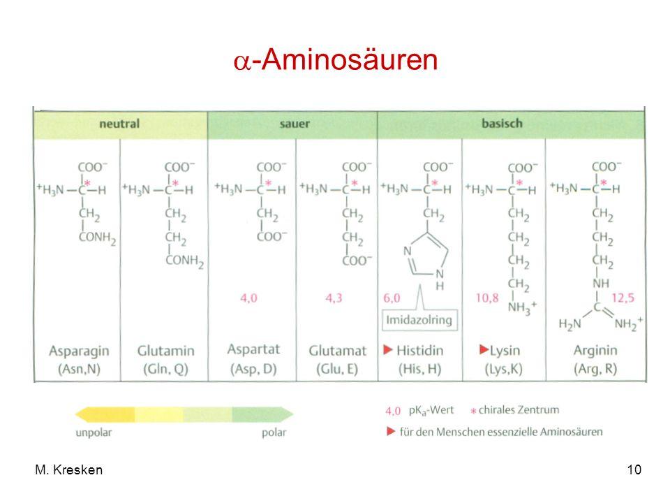 10M. Kresken -Aminosäuren
