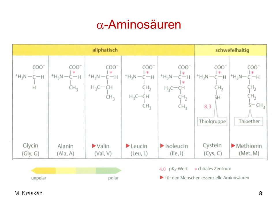 8M. Kresken -Aminosäuren