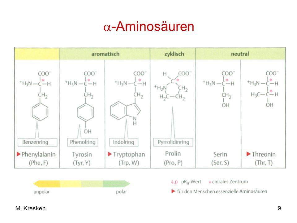 9M. Kresken -Aminosäuren