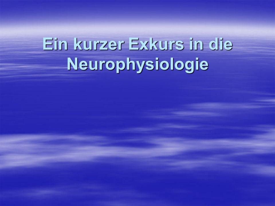 Ein kurzer Exkurs in die Neurophysiologie
