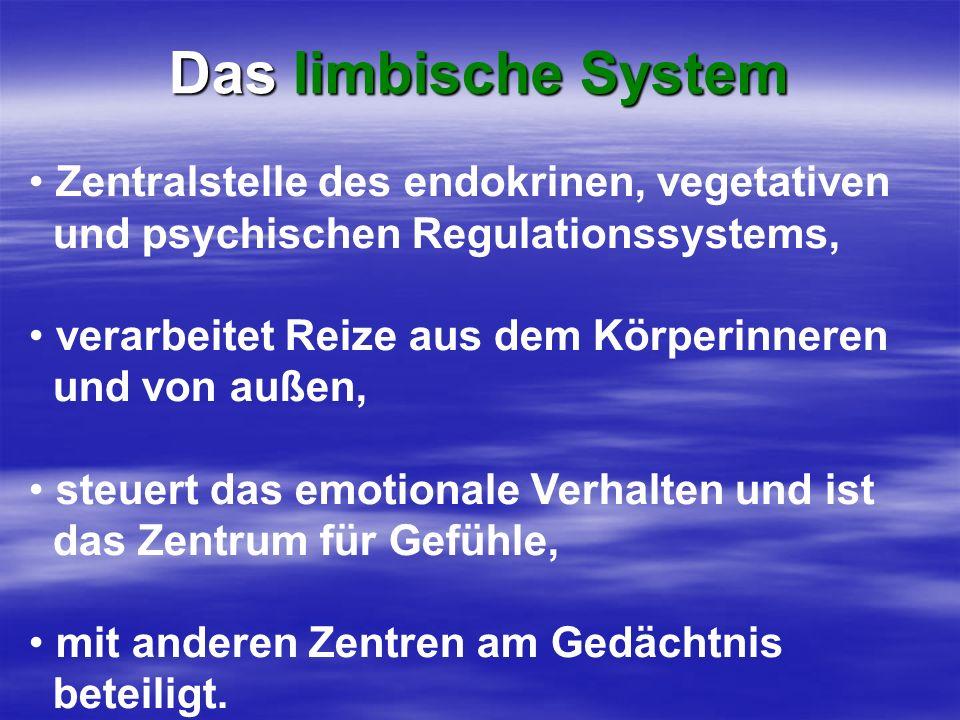 Zentralstelle des endokrinen, vegetativen und psychischen Regulationssystems, verarbeitet Reize aus dem Körperinneren und von außen, steuert das emoti