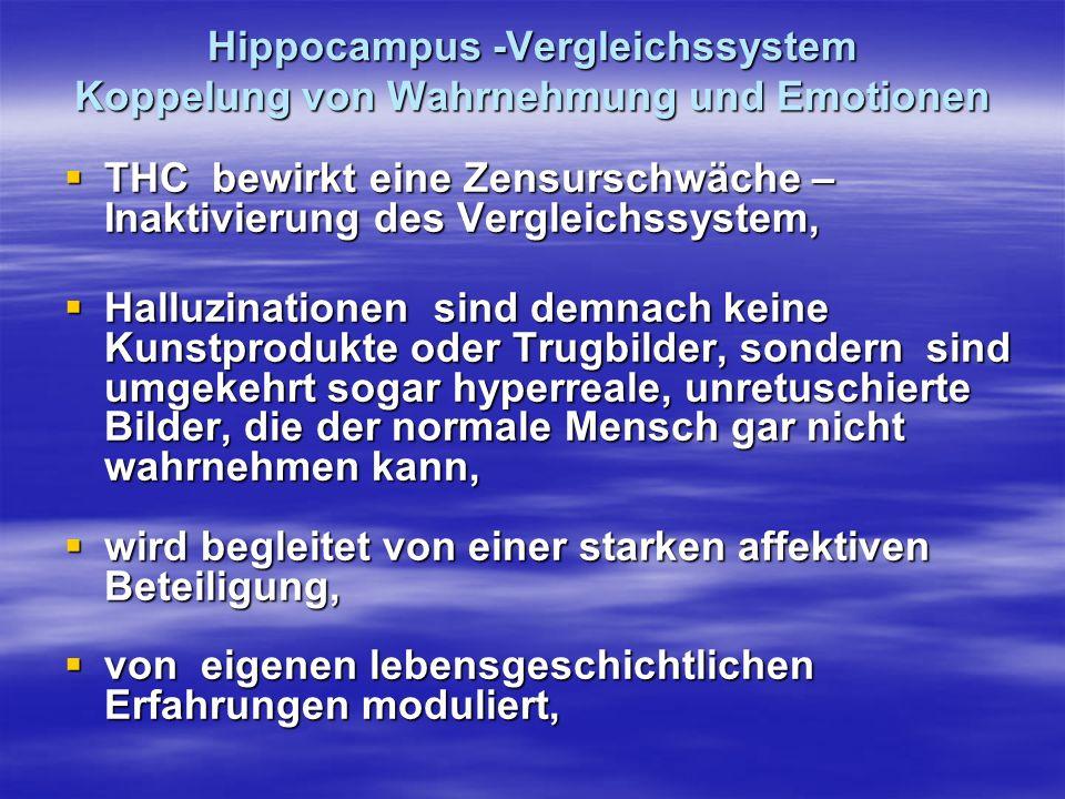 Hippocampus -Vergleichssystem Koppelung von Wahrnehmung und Emotionen THC bewirkt eine Zensurschwäche – Inaktivierung des Vergleichssystem, THC bewirk