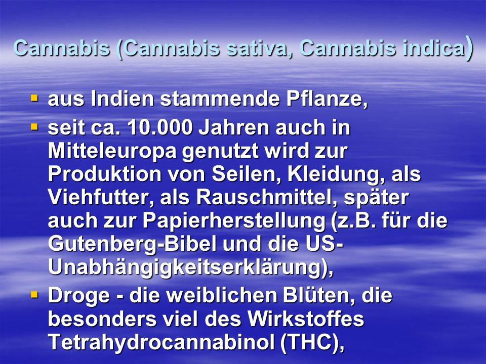Cannabis (Cannabis sativa, Cannabis indica ) aus Indien stammende Pflanze, aus Indien stammende Pflanze, seit ca. 10.000 Jahren auch in Mitteleuropa g