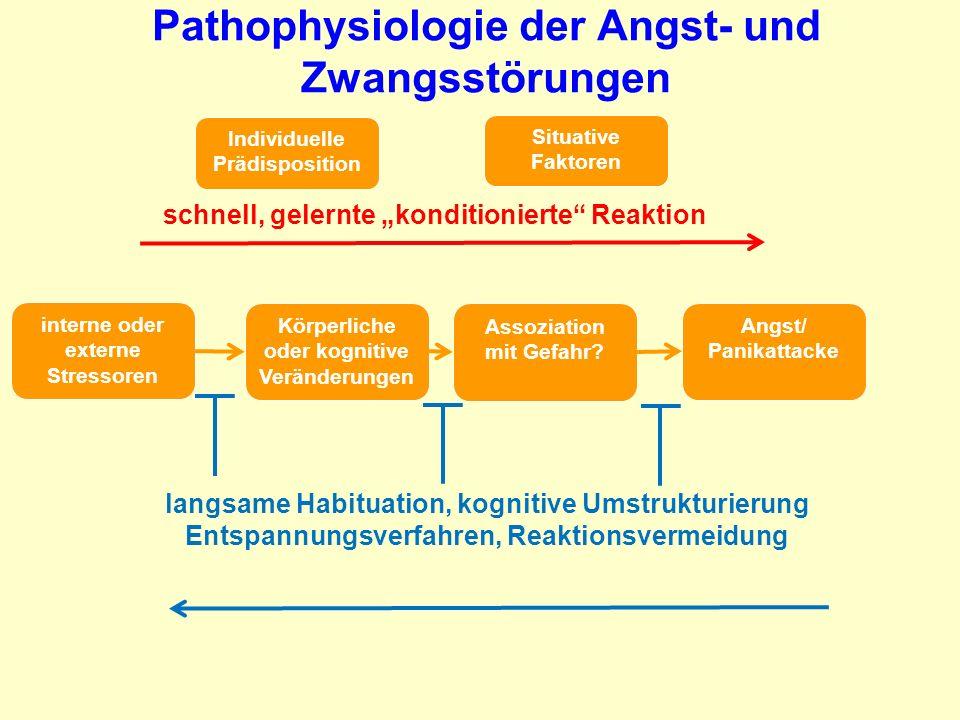 Pathophysiologie der Angst- und Zwangsstörungen interne oder externe Stressoren Körperliche oder kognitive Veränderungen Assoziation mit Gefahr? Angst