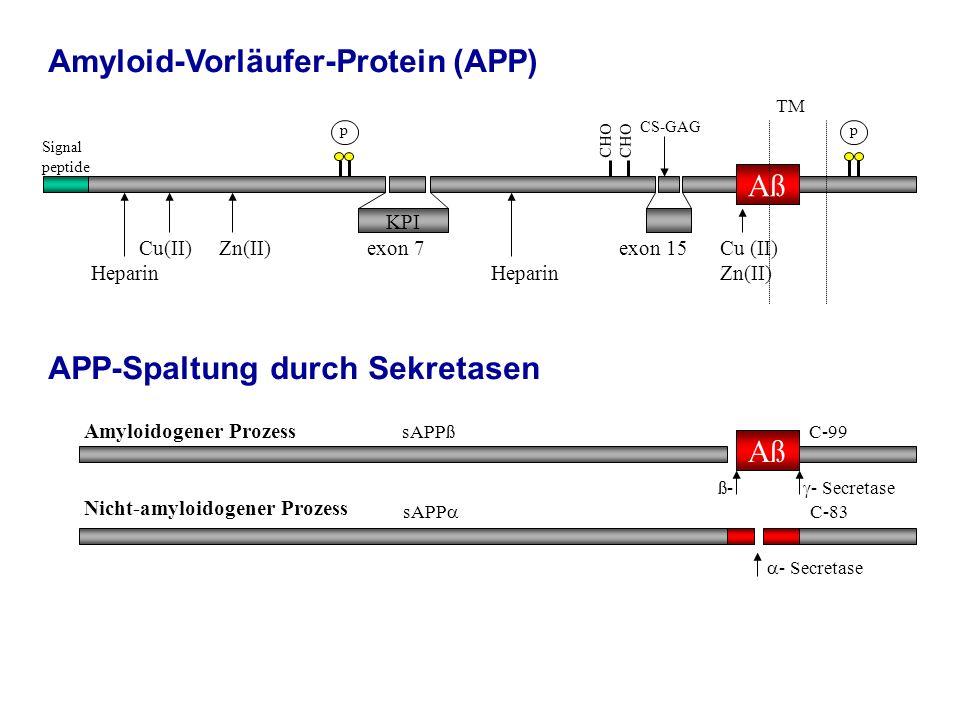 Signal peptide Cu(II) Zn(II) exon 7 exon 15 Cu (II) Heparin Heparin Zn(II) p p KPI CS-GAG CHO Aß Amyloidogener Prozess Nicht-amyloidogener Prozess sAP