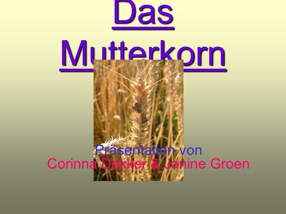 Inhaltsverzeichnis Aussehen des Mutterkorns Vorkommen des Mutterkorns Zusatzinformationen