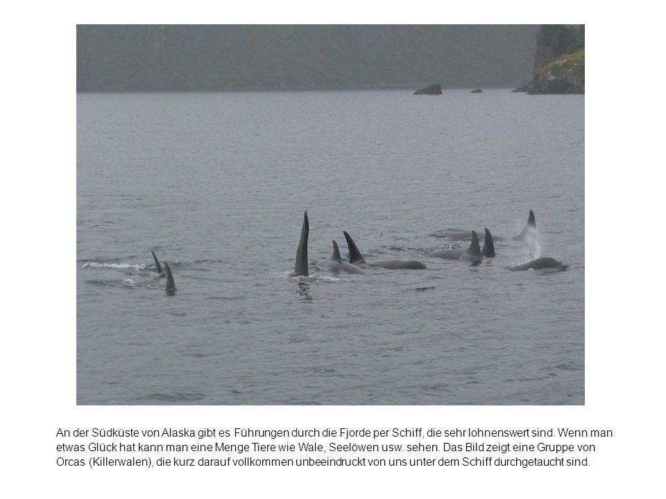 An der Südküste von Alaska gibt es Führungen durch die Fjorde per Schiff, die sehr lohnenswert sind.