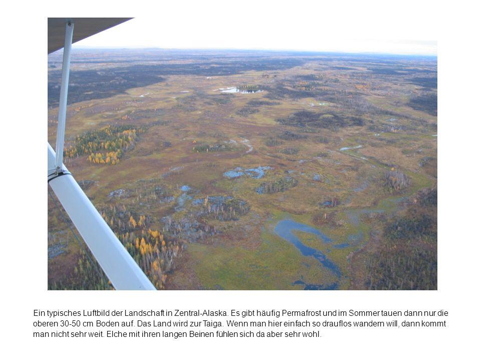 Ein typisches Luftbild der Landschaft in Zentral-Alaska.