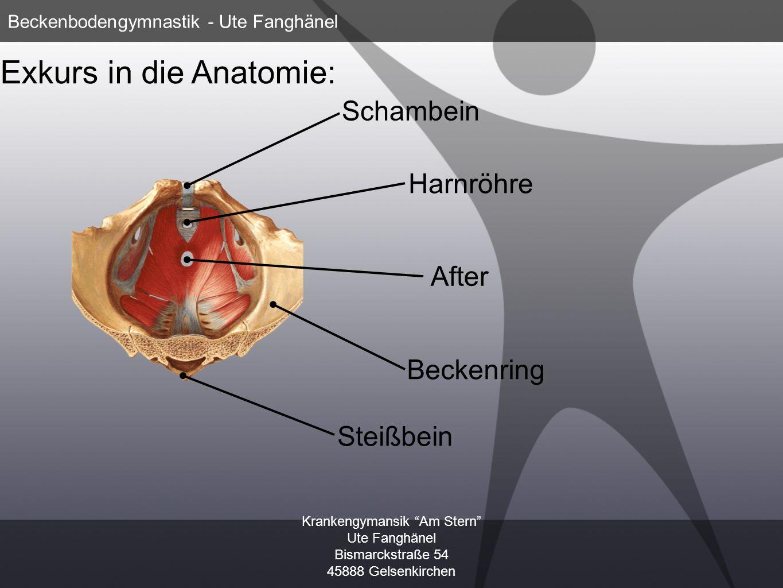 Krankengymansik Am Stern Ute Fanghänel Bismarckstraße 54 45888 Gelsenkirchen Beckenbodengymnastik - Ute Fanghänel Exkurs in die Anatomie: Schambein Ha