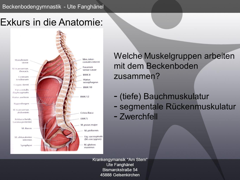 Krankengymansik Am Stern Ute Fanghänel Bismarckstraße 54 45888 Gelsenkirchen Beckenbodengymnastik - Ute Fanghänel Welche Muskelgruppen arbeiten mit de