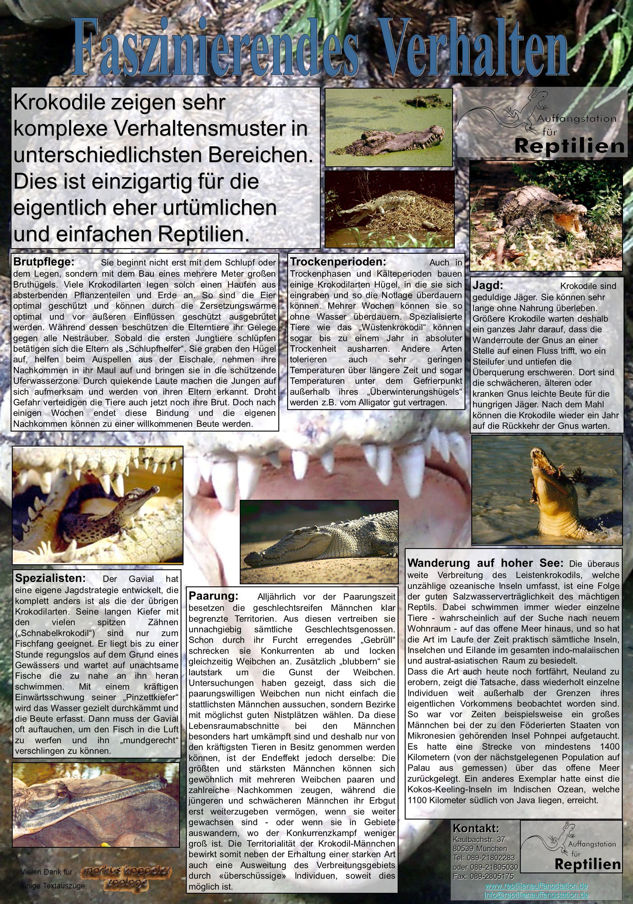 Krokodile zeigen sehr komplexe Verhaltensmuster in unterschiedlichsten Bereichen. Dies ist einzigartig für die eigentlich eher urtümlichen und einfach