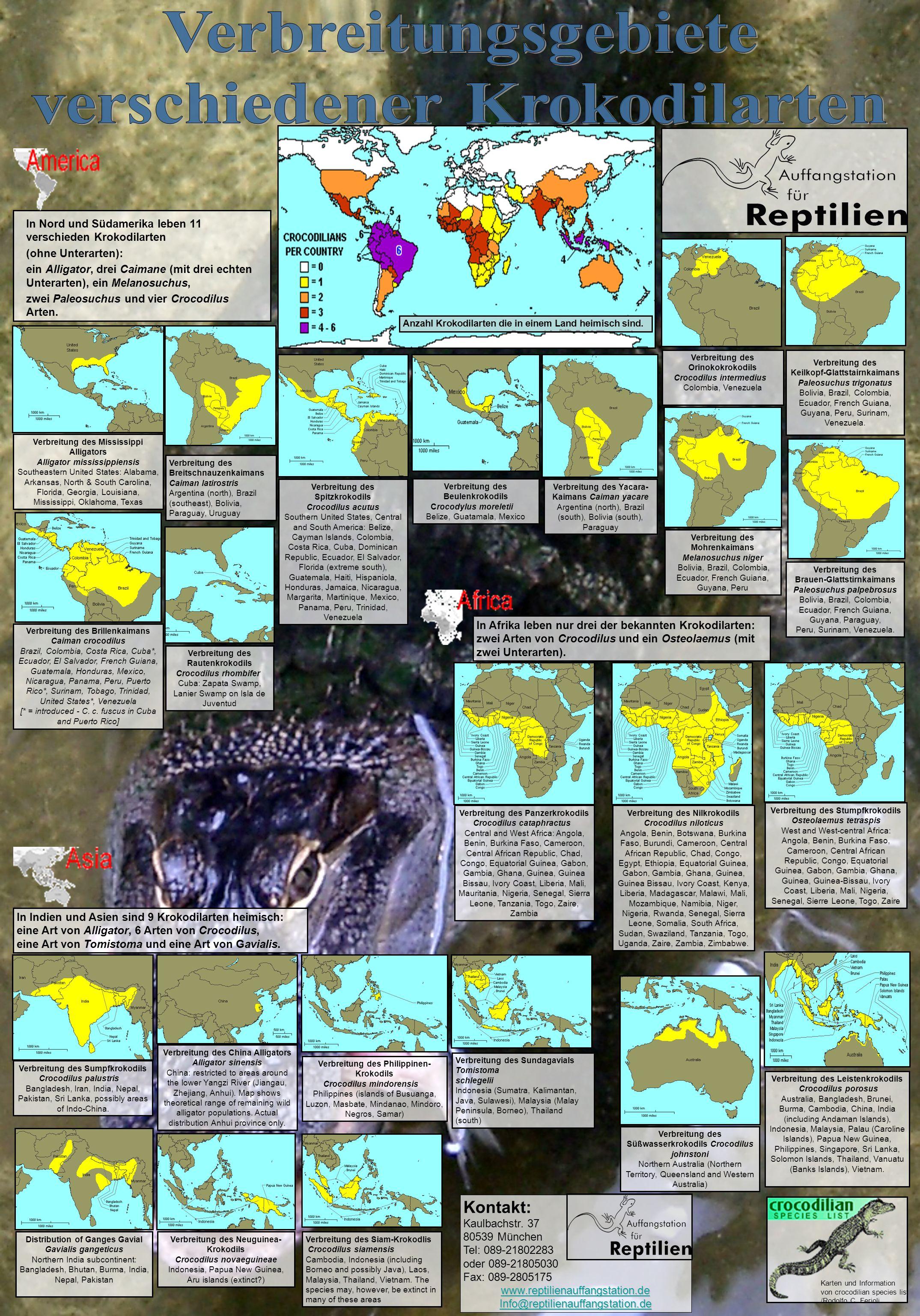 In Nord und Südamerika leben 11 verschieden Krokodilarten (ohne Unterarten): ein Alligator, drei Caimane (mit drei echten Unterarten), ein Melanosuchu