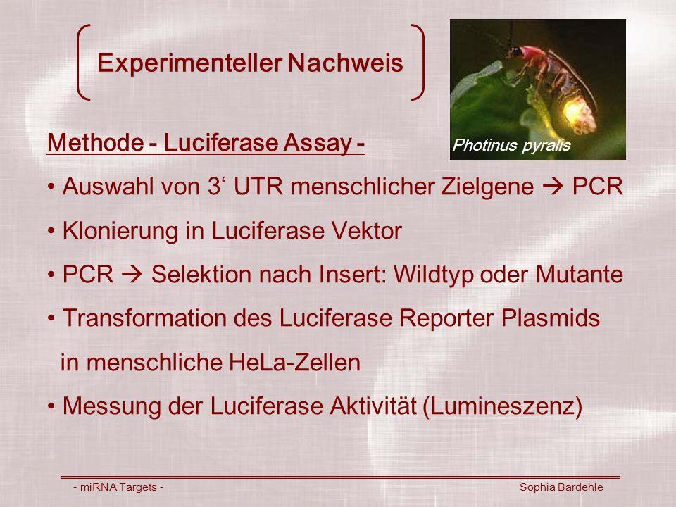 Experimenteller Nachweis - miRNA Targets - Sophia Bardehle Methode - Luciferase Assay - Auswahl von 3 UTR menschlicher Zielgene PCR Klonierung in Luci
