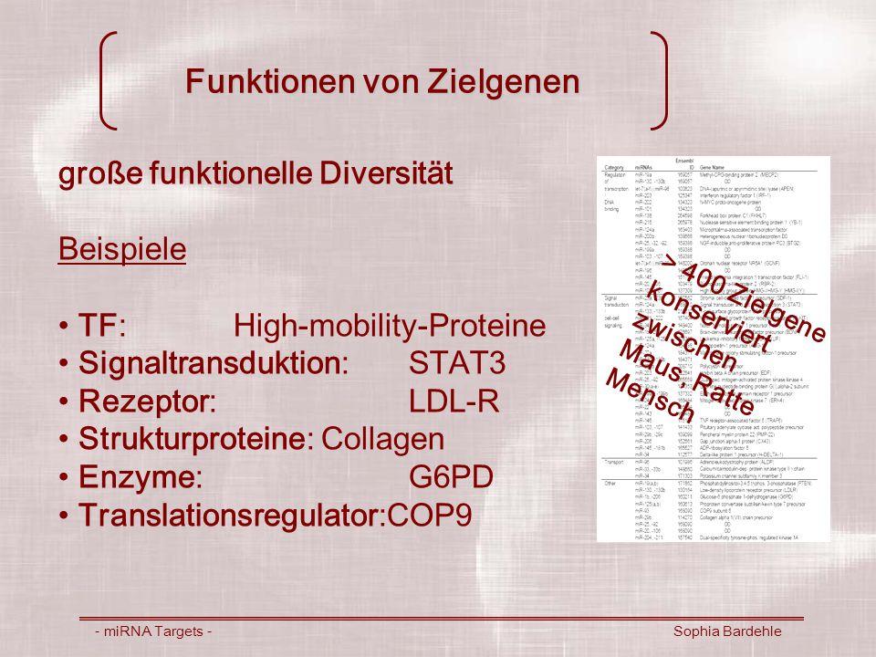 Funktionen von Zielgenen - miRNA Targets - Sophia Bardehle große funktionelle Diversität Beispiele TF:High-mobility-Proteine Signaltransduktion:STAT3