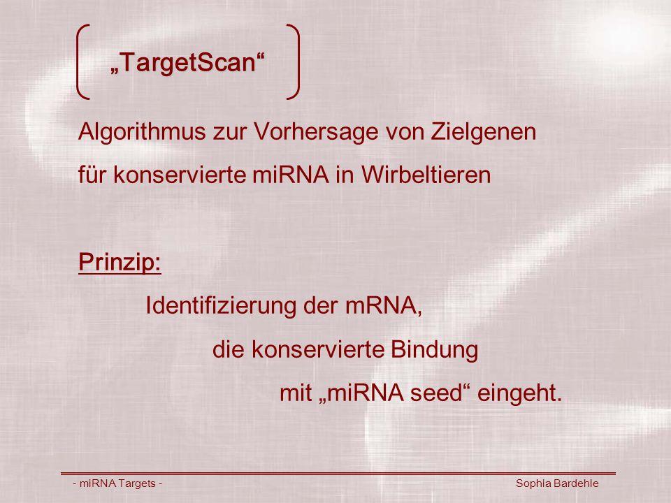 TargetScan- Methode - miRNA Targets - Sophia Bardehle Grundlage: konservierte miRNA mehrerer Organismen (Rfam Download; Sanger Institute) Annotationen orthologer 3UTR mRNA-Sequenzen (Ensembl EnsMart)