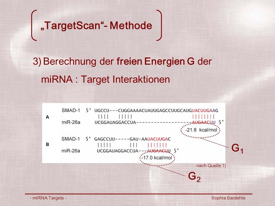 TargetScan- Methode - miRNA Targets - Sophia Bardehle 3)Berechnung der freien Energien G der miRNA : Target Interaktionen G1G1 G2G2 nach Quelle 1)