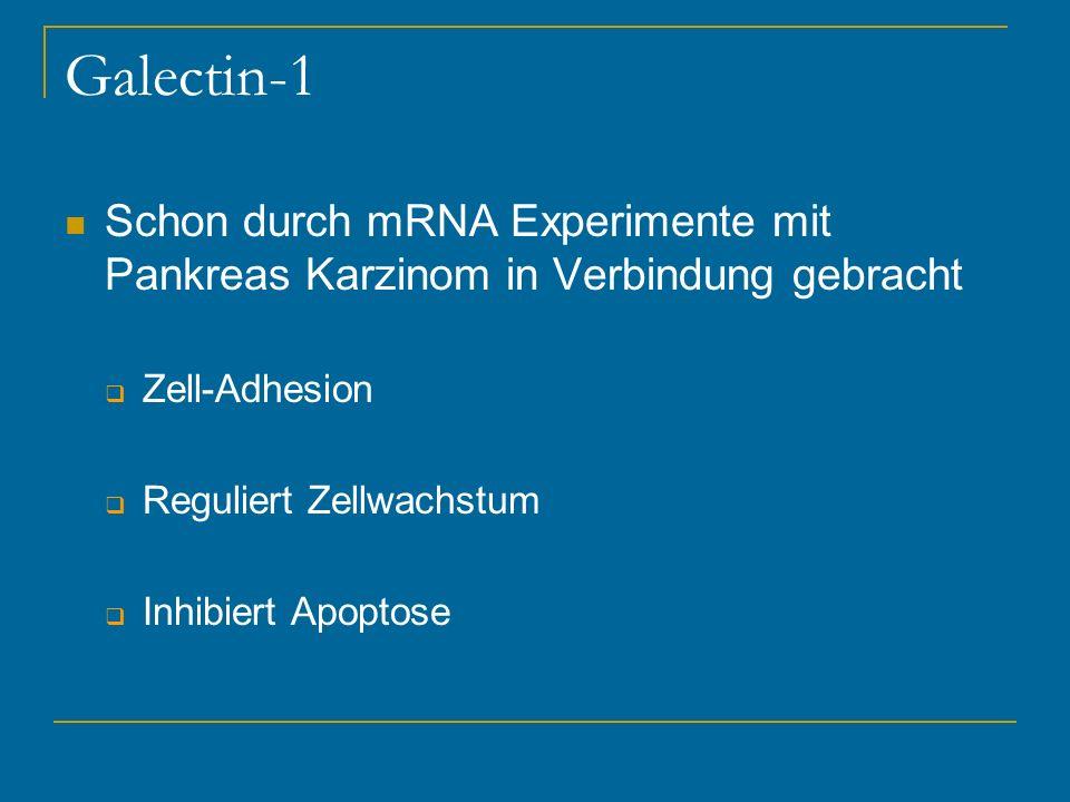 Galectin-1 Schon durch mRNA Experimente mit Pankreas Karzinom in Verbindung gebracht Zell-Adhesion Reguliert Zellwachstum Inhibiert Apoptose