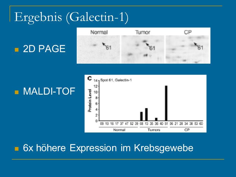 Ergebnis (Galectin-1) 2D PAGE MALDI-TOF 6x höhere Expression im Krebsgewebe