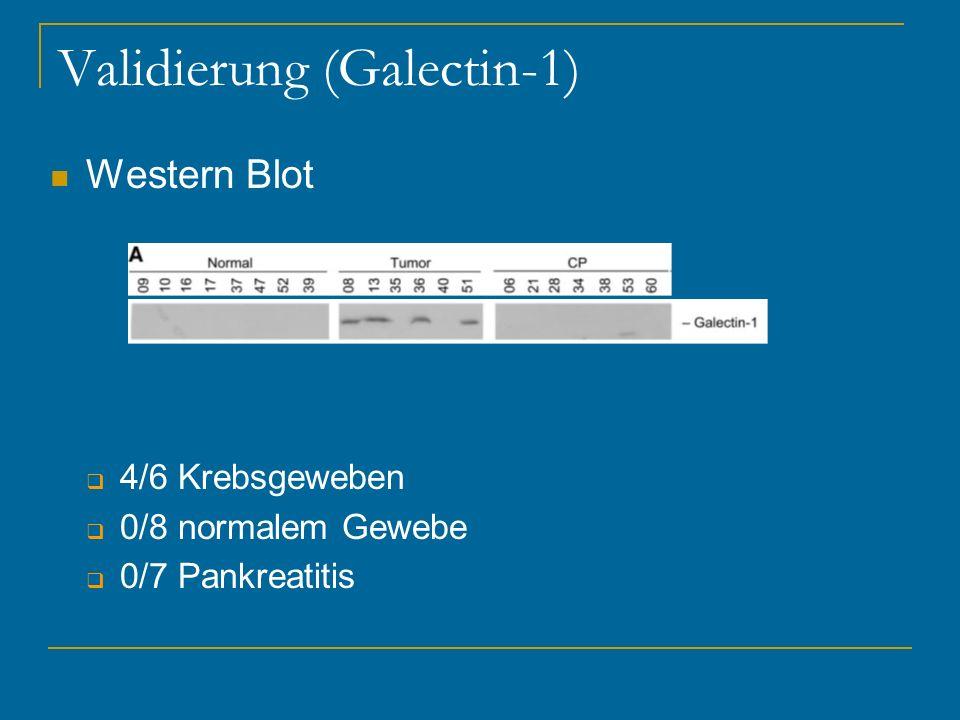 Validierung (Galectin-1) Western Blot 4/6 Krebsgeweben 0/8 normalem Gewebe 0/7 Pankreatitis