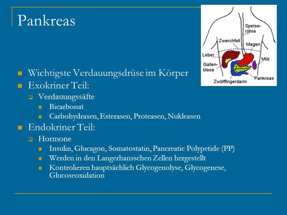 Pankreas Wichtigste Verdauungsdrüse im Körper Exokriner Teil: Verdauungssäfte Bicarbonat Carbohydrasen, Esterasen, Proteasen, Nukleasen Endokriner Tei