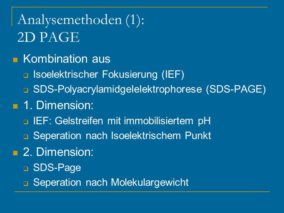 Analysemethoden (1): 2D PAGE Kombination aus Isoelektrischer Fokusierung (IEF) SDS-Polyacrylamidgelelektrophorese (SDS-PAGE) 1. Dimension: IEF: Gelstr