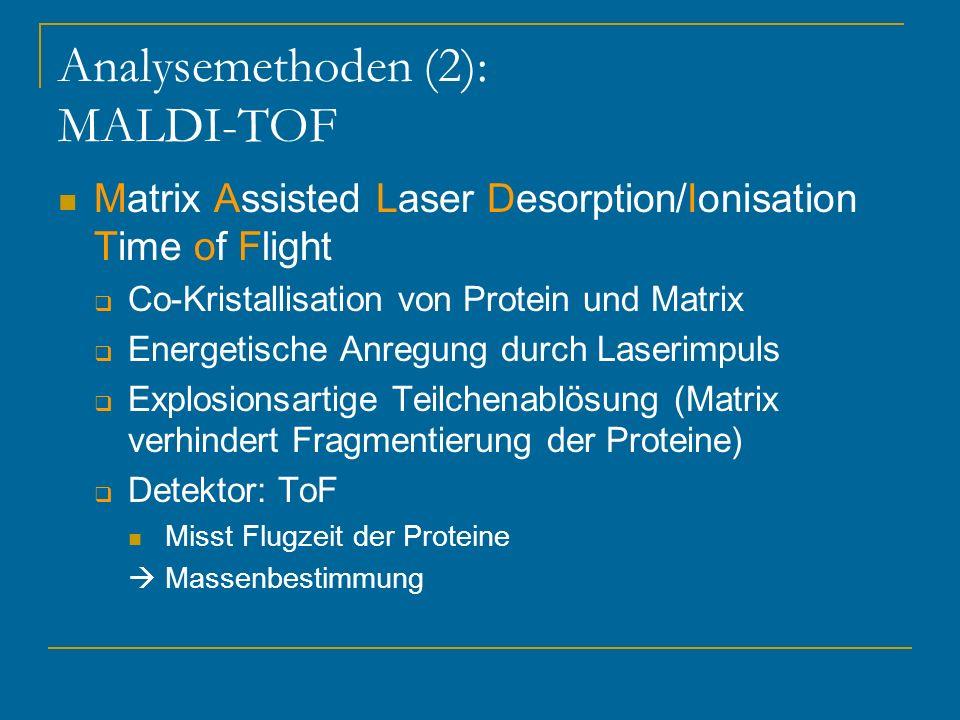Analysemethoden (2): MALDI-TOF Matrix Assisted Laser Desorption/Ionisation Time of Flight Co-Kristallisation von Protein und Matrix Energetische Anreg