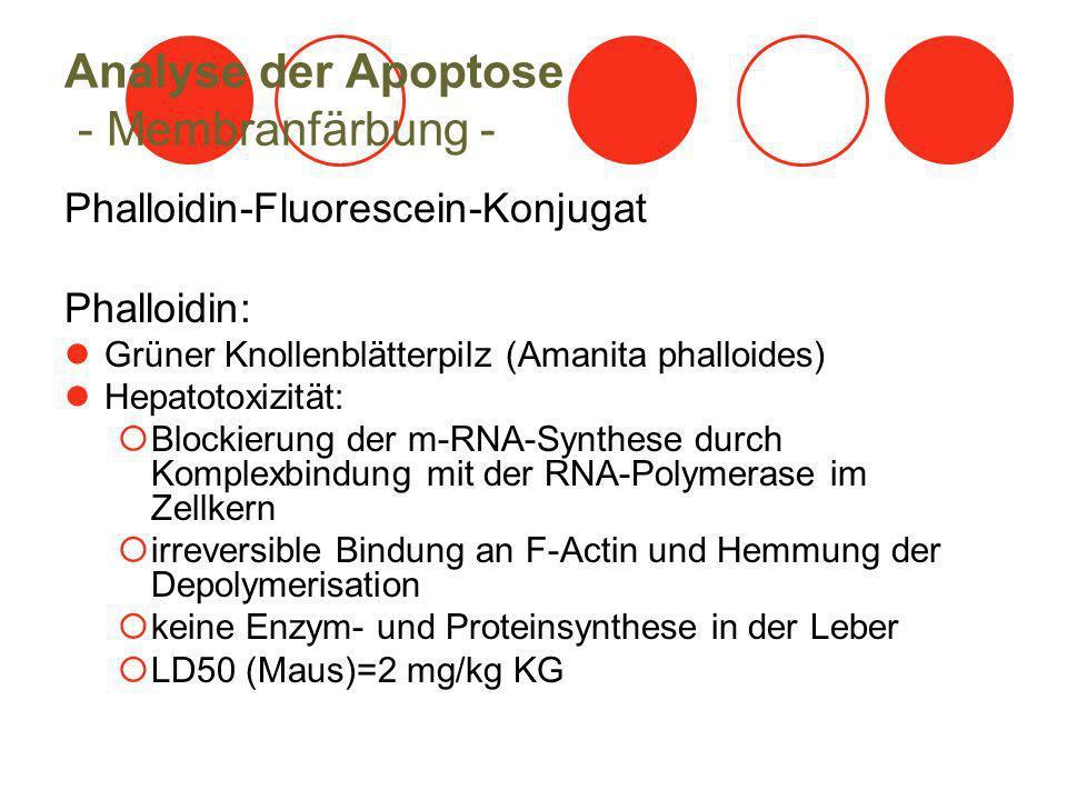 Analyse der Apoptose - Membranfärbung - Phalloidin-Fluorescein-Konjugat Phalloidin: Grüner Knollenblätterpilz (Amanita phalloides) Hepatotoxizität: Bl