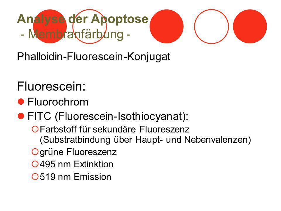 Analyse der Apoptose - Membranfärbung - Phalloidin-Fluorescein-Konjugat Fluorescein: Fluorochrom FITC (Fluorescein-Isothiocyanat): Farbstoff für sekundäre Fluoreszenz (Substratbindung über Haupt- und Nebenvalenzen) grüne Fluoreszenz 495 nm Extinktion 519 nm Emission