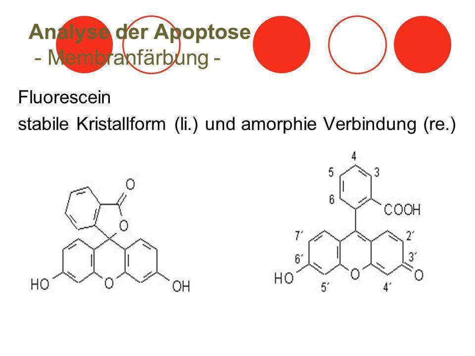 Analyse der Apoptose - Membranfärbung - Fluorescein stabile Kristallform (li.) und amorphie Verbindung (re.)