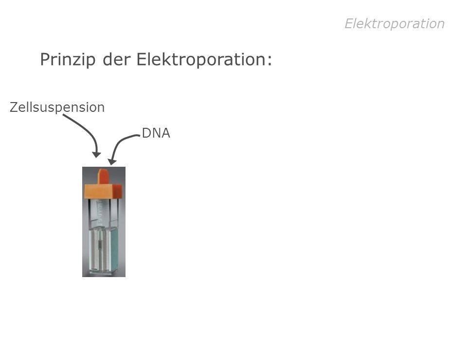 Elektroporation Prinzip der Elektroporation: DNA Zellsuspension