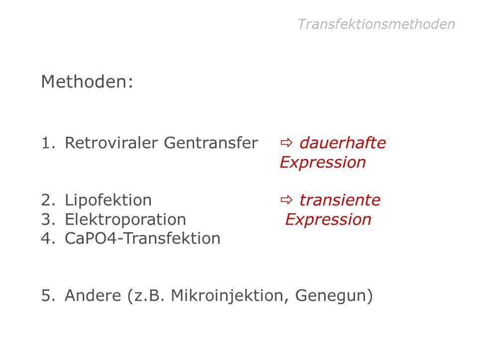 Optimierung Protokoll – Tag 2 Detoxifikation 24 h nach Transfektion Mediumwechsel durchführen warmes Medium!