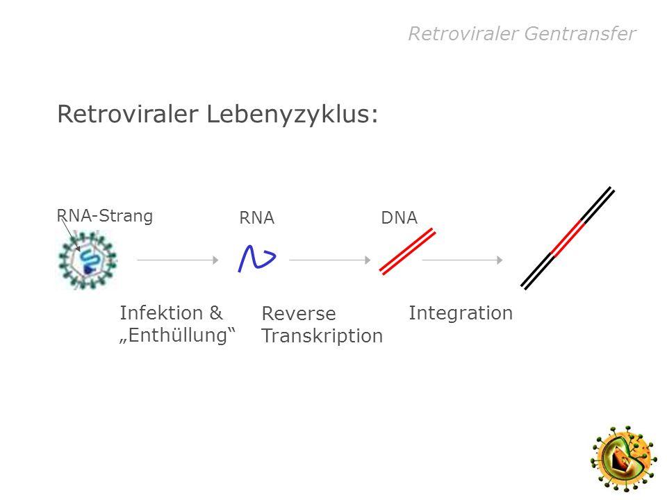 Retroviraler Gentransfer Retroviren und Gentransfer: Verpackungszell-Linie (alle Erbinformation für das leere Virus)