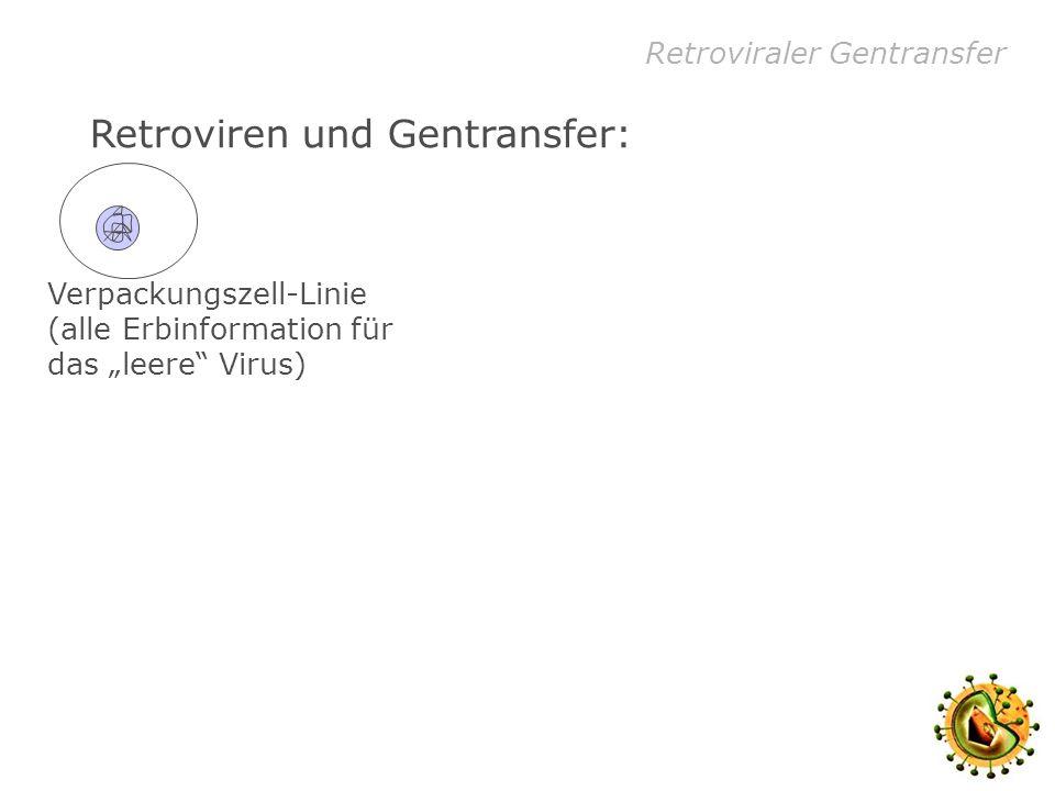 Retroviraler Gentransfer Retroviren und Gentransfer: Verpackungszell-Linie (alle Erbinformation für das leere Virus) Plasmid mit dem einzubringenden Gen (= Virusinhalt)