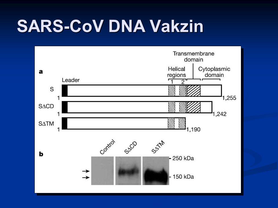 SARS-CoV DNA Vakzin
