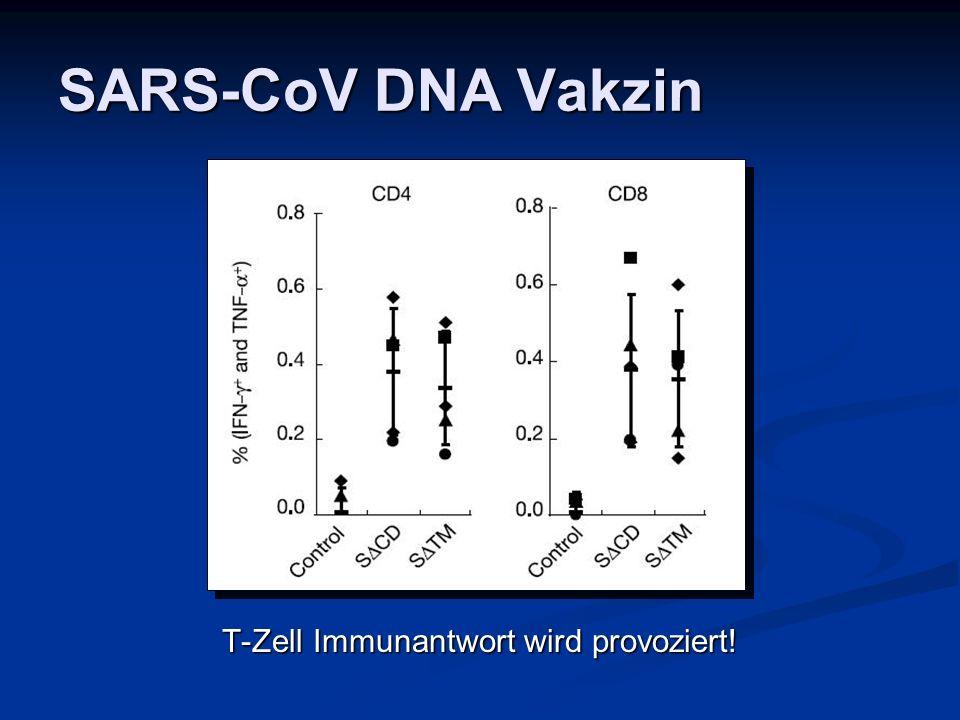 T-Zell Immunantwort wird provoziert!