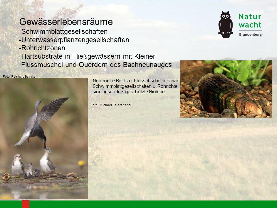 Brutvogelkolonien müssen geschützt werden